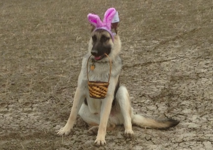 Easter Titus German Shepherd Dog  2014-03-30
