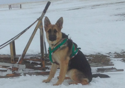 Tekoa Sled Harness 2014-01-03