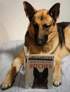 GSD Bitches