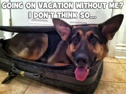 Vacation GSD