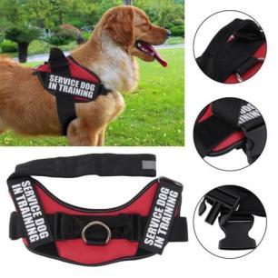 Service Dog In Training Harness