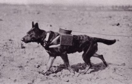 World War Dog